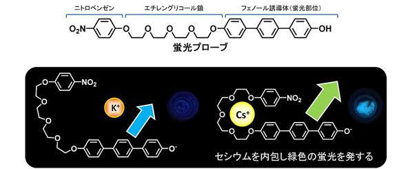 セシウムを光らせて可視化することに成功、除染の効率化に期待