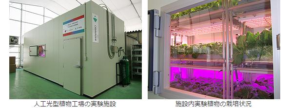 大林組、省エネ・低コストの人工光型植物工場で千葉大と提携