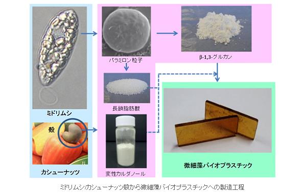 ミドリムシを主原料に植物由来成分約70%のバイオプラスチックを開発