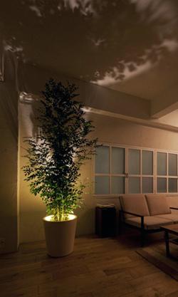 LED照明と観葉植物が合体 室内に植物の影を映し出すプランター