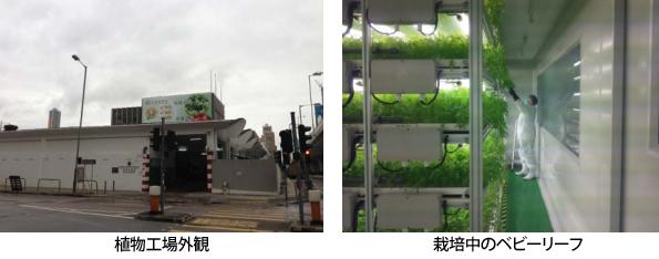 三菱化学、香港の野菜販売業者へ植物工場システムを販売
