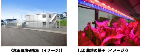 京王電鉄、八王子に植物工場 昭和電工製のLED、Shigyo法活用で2年後に事業化