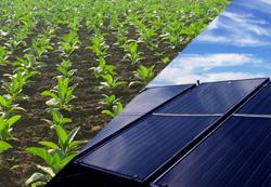 農地への太陽光パネル設置、農業継続なら許可 農水省が発表