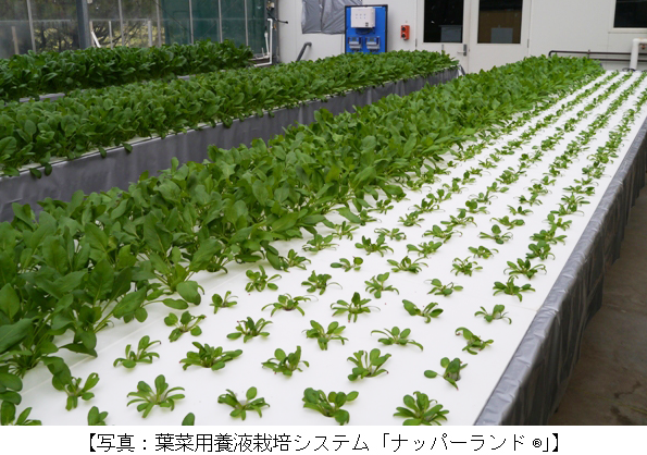 三菱樹脂など、オーストラリアで太陽光利用型植物工場の実証実験を開始