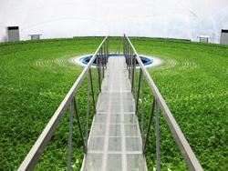 カゴメ、ドーム型植物工場のグランパへ出資 アグリビジネスで連携