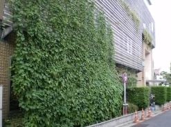 新宿「みどりのカーテン」で採れすぎたゴーヤなど、他の野菜と無料交換 8月3日