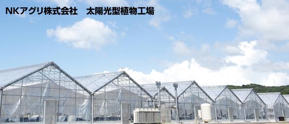 和歌山県、植物工場で野菜のポリフェノールを増加させる技術開発開始