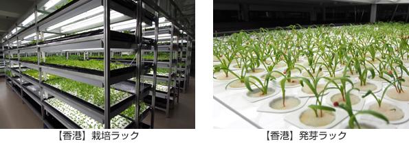 モンゴルの植物工場に日本の生産管理システムが導入 JICAの開発案件で