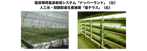 三菱樹脂、太陽光利用型植物工場を長浜工場内に設置 障がい者雇用を促進