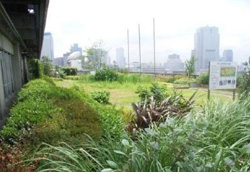 24年度の屋上・壁面緑化、前年度に比べ減少
