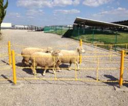 日本毛織、兵庫県のメガソーラー内でヒツジを放牧 地域交流・企業PRに