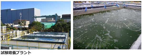 「藻からジェット燃料」、IHIが太陽光だけでの安定培養に成功