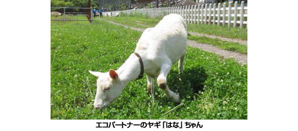 埼玉県・西武鉄道のメガソーラー、ヤギが除草のお手伝い