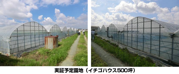 福岡県八女市、いちごハウスで小型木質バイオマスボイラ農業施設の実証を開始