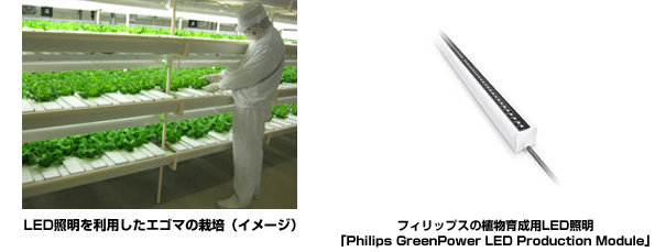 富山県の植物工場、フィリップスの植物育成用LED照明を採用