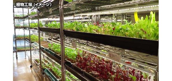 IT系企業が植物工場ビジネスに参入 鳥取県で障がい者の雇用拡大に貢献