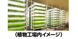 ローソン、秋田県に初の植物工場 ベビーリーフを年間31トン生産