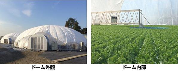 三重県にドーム型植物工場 王子グループがアグリビジネスに参入