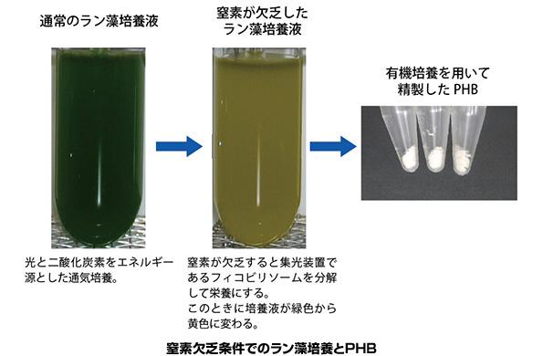 CO2からバイオプラスチック 理研が生産量3倍にする方法を発見