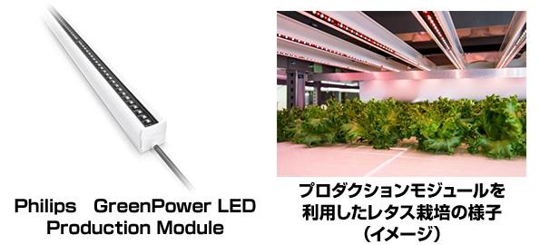 フィリップスの植物育成用LED、大阪府立大学の植物工場に1万3千本採用