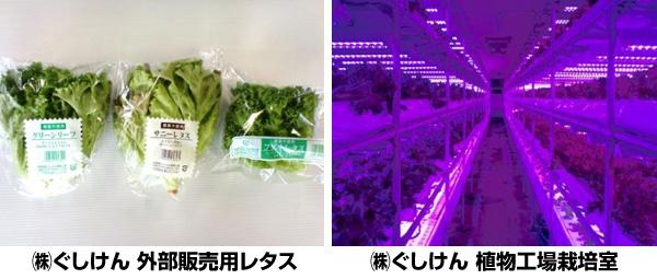 沖縄県の植物工場、専用LEDとShigyo法で高速栽培 電気代も3割削減