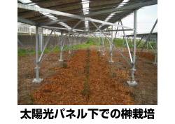 埼玉県美里町、耕作放棄地をメガソーラー規模のソーラーシェアリングに