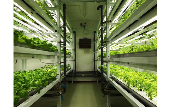 医療・介護現場にユニット型植物工場 「小スペース」でも園芸療法