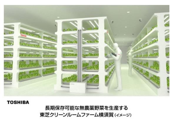 東芝、昔フロッピーディスクを作っていたクリーンルームを植物工場に転用