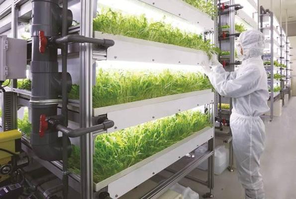 ローソン、秋田県に初の植物工場 ベビーリーフを東北・関東の各店へ出荷