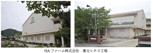 兵庫県の廃校になった小学校体育館、植物工場に変身 7月から野菜を出荷