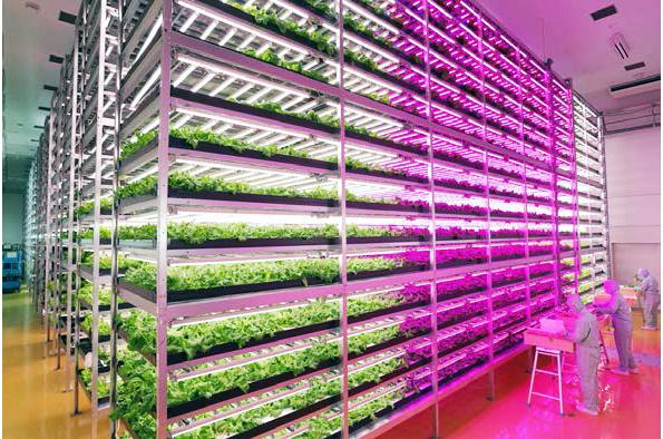 宮城県に世界最大規模のLED照明型植物工場が完成 千葉でセミナーも