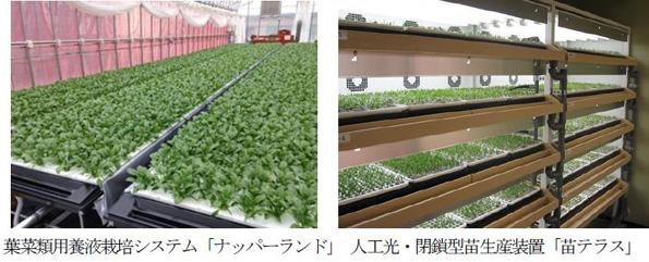 三菱樹脂・長浜工場内の植物工場、野菜の販売スタート 中国へも展開