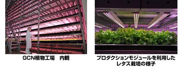 フィリップスの植物育成用LED照明、今度は大阪府立大の植物工場に採用