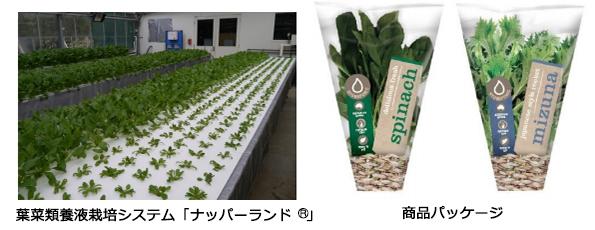 三菱樹脂、オーストラリアに太陽光利用型植物工場設立 富裕層向け野菜販売