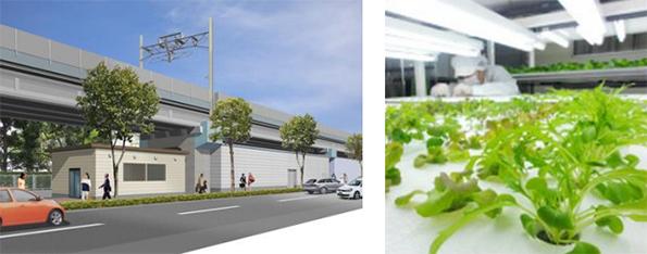 東京メトロ、東西線の高架下に植物工場 低カリウムレタスなど1月に栽培開始