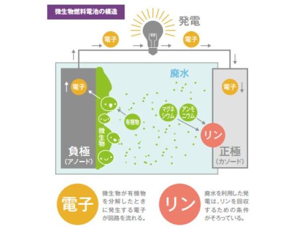 畜産廃水から発電+リン回収に成功! 微生物燃料電池