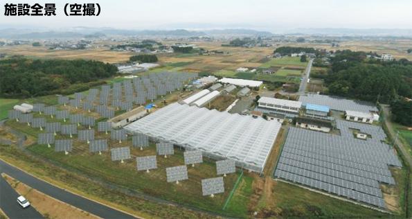 追尾型太陽光発電でソーラーシェアリング(いちじく栽培) 発電量は1.5倍