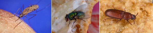 青色LEDに殺虫効果 蚊やハエ、コナムシも駆除できる新たな害虫防除技術