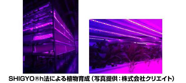 LED照明を用いた植物工場を海外展開 昭和電工・山口大学が協定締結