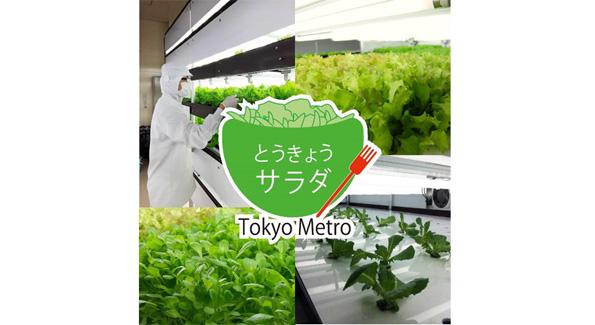 東京メトロ、野菜をつくる 高架下スペースの植物工場で無農薬栽培