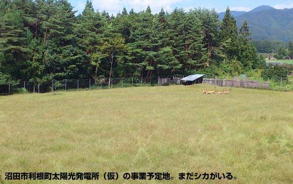群馬県に「メガソーラーシェアリング」 鹿の放牧地→太陽光発電+大豆栽培
