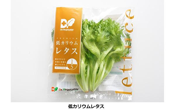 腎臓障害を持つ人でも食べられる低カリウムレタス 香川の植物工場でも栽培へ
