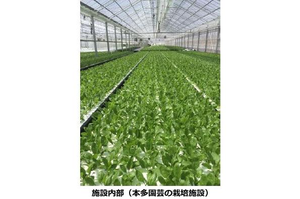 オリックス、長野県で太陽光利用型の植物工場を稼働 年間19回も収穫