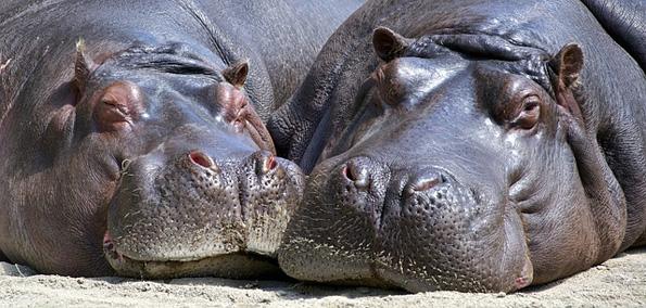 天王寺動物園も省エネ化や! 大阪府・市が公的施設でESCO事業者公募