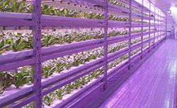 オールLED・完全閉鎖型では世界最大規模 静岡県の植物工場(1851平米)