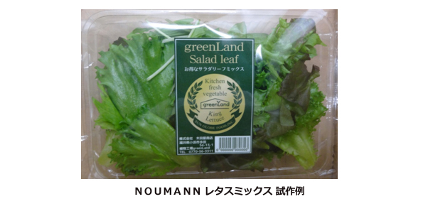 福井県に玉レタスを量産する植物工場 将来は中東でハラル野菜栽培も