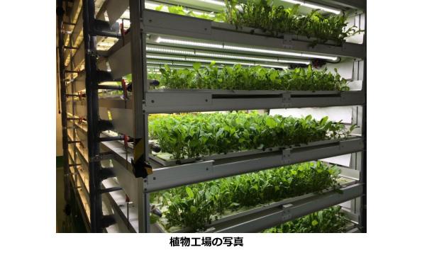 神奈川県、植物工場のベビーリーフを「未病」に効く商品として認定