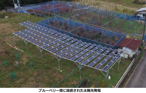 静岡県に「市民共同出資によるソーラーシェアリング」 ブルーベリーを栽培
