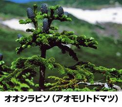 「日本固有の樹種の群落は回避」 岩手県の地熱発電所計画に環境大臣が意見