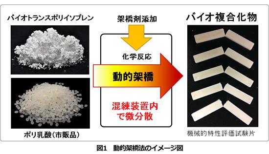 大阪大学など、「杜仲」から高機能バイオ複合材料の開発に成功